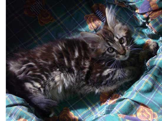 hindi sexy video film cats blad